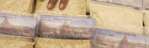 quinoa-bolsas
