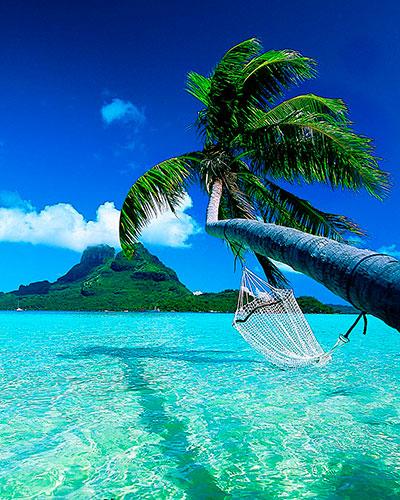 palmera, agua de coco, coco