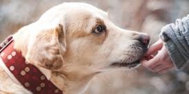 dog-1861839_640