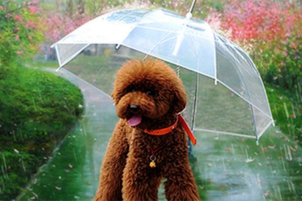 """Paraguas para perros, con correa para arnés disponible en """"Club de perros y gatos""""."""